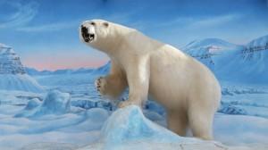 Isbørn Svalbardbutikken